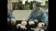 Новородени Бебета Панди