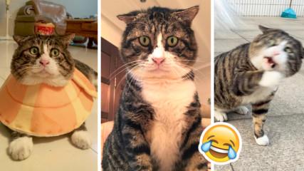 Това е най-драматичната котка в света! Очите на Танг наистина говорят!