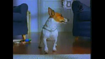 Реклама На Мебели - Кучето На Ikea