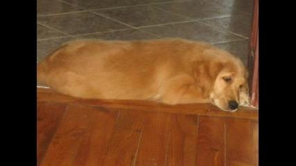 Boriana7s Dog