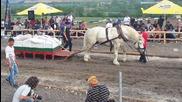коне тежковози разлог