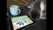 котка играе на ipad (смях)