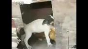 Колкото Пъти Го Гледате Толкова Ще Се Смеете Куче Изнасилва Кокошка Много Смях