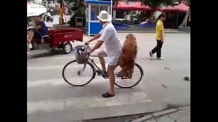 Кучето мечта