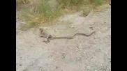 Луда катеричка атакува змия! ;д