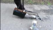 Срамежливо коте на разходка