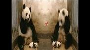 Baby Panda Madness