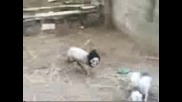 Страшна Овца