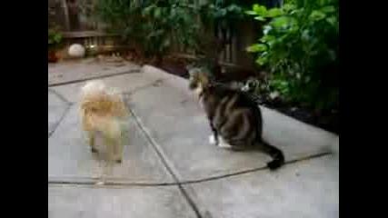 Кучешката Ревност