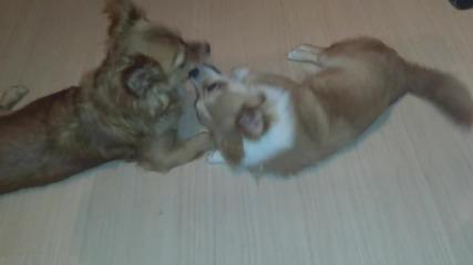 Кученца си играят! Сладко!!