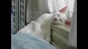котка спи много смешно