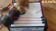 Зверски бой на ринга !