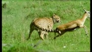 Триумфът на тревопасните - живота на бозайниците