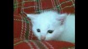 Котето0001.wmv