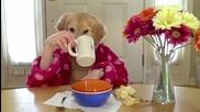 Куче закусва и пие чай с ръце