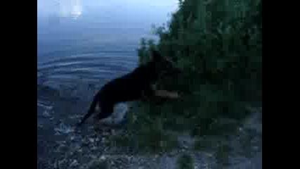 Игра В Реката - Немска Овчарка - 3 Месеца