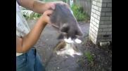 Котка е хванала плъх и не го пуска !