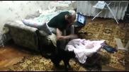 Коте защитава бебе от баща му