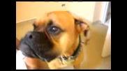 Кученцето Оскър - Сирената