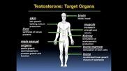 Muscle Damage - Страничните ефекти от анаболните стероиди част2