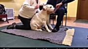 Ветеринари помагат на куче да проходи отново!