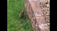 Заек атакува змия в опит да спаси малкото си