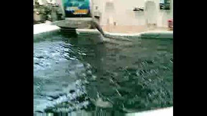 Варна-делфинариум