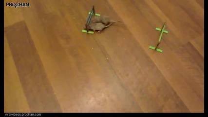 Една мишка която е много по-различна от останалите
