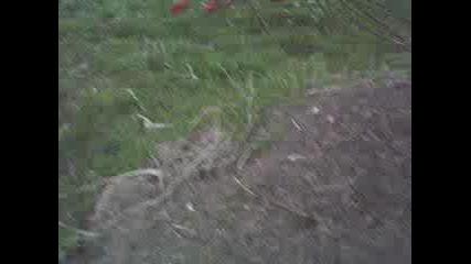 Пич Яде Мравки