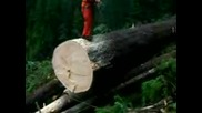 Bucking A Spruce.3gp