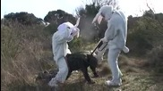Реми Гайлард : Заек срещу ловец