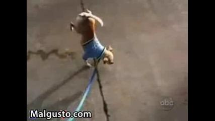 Куче пикае на предни крака