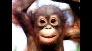 Малка маймунка пее Happy Birthday