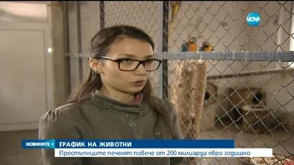 Канал за незаконна търговия на животни през България