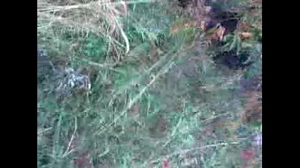 лов на глигани с дого аржентино край София