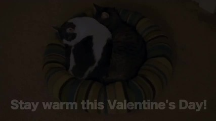Mean Kitty - Valentines Day