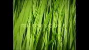 Minuscule~tenace