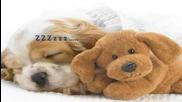 Куче и коте- пpиятелство
