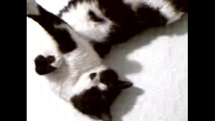 Пияна Котка