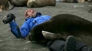 Да получиш прегръдка от морски тюлен