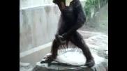 Маймуна Мастурбира