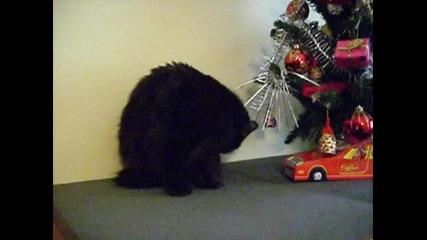 черно коте 12.12.2009 Dsci0021