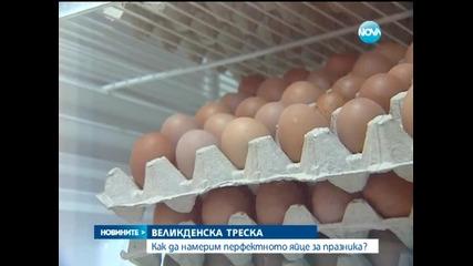 В търсене на перфектното яйце за Великден - Новините на Нова