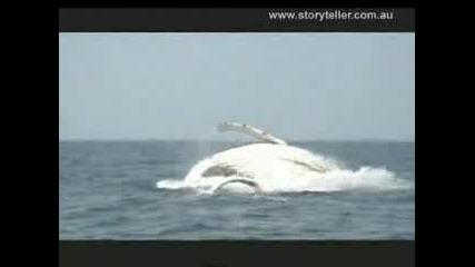 Невероятни Китове