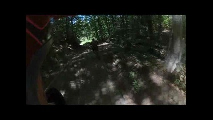 Riding in the woods - Mtb