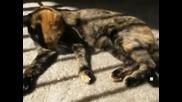 Двуликата котка Винъс се превърна в интернет сензация