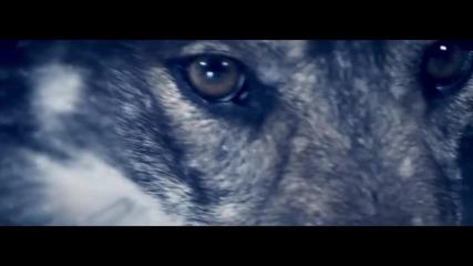 Maitre Gims - Meurtre par strangulation (official Video)