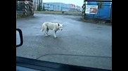 Куче денси на техно