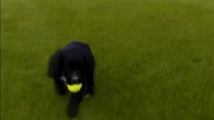 Анди Мъри тренира с кучета