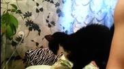 Коте моли да го погалят